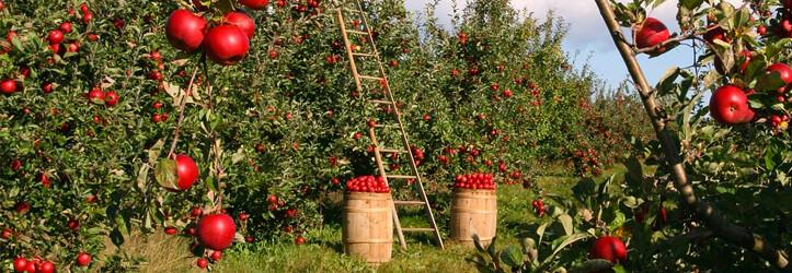 Düşük Faizli Tarım Kredileri İçin ÇKS